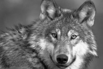 novela negra la hora de los lobos thriller hard boiled puentedemando.es